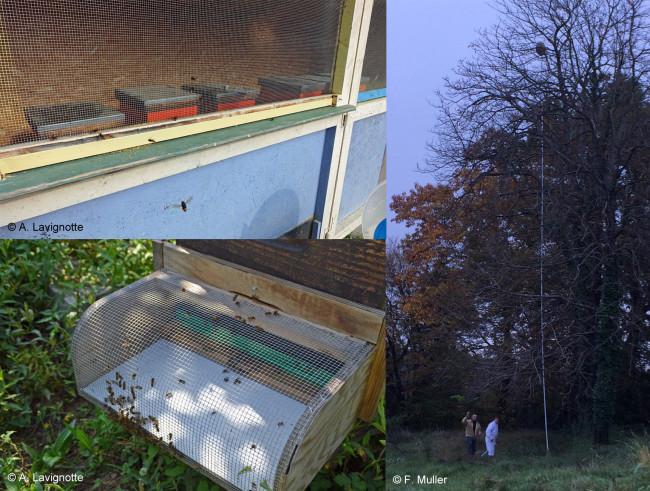 À gauche, en haut : Cabane grillagée, en bas : Muselière à frelon. À droite : Perche télescopique pour injecter un insecticide dans le nid.